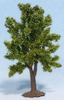 Švestka strom